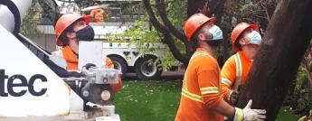 Hydro Ottawa crews, wearing masks, install a hydro pole