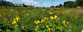 Pollinator meadow with various flowers and plants in a utility corridor with hydro towers and poles